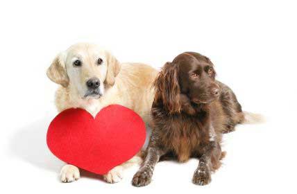 Врожденные пороки сердца у домашних животных – статья о лечении животных ИВЦ